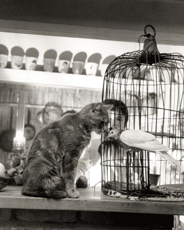 doisneau-robert-child-cat-and-dove